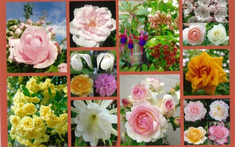プリンセスのようなお花たち